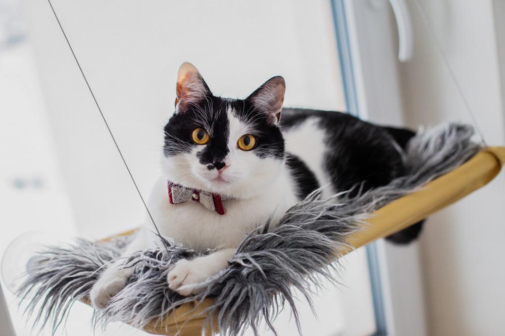 półka na okno dla kota