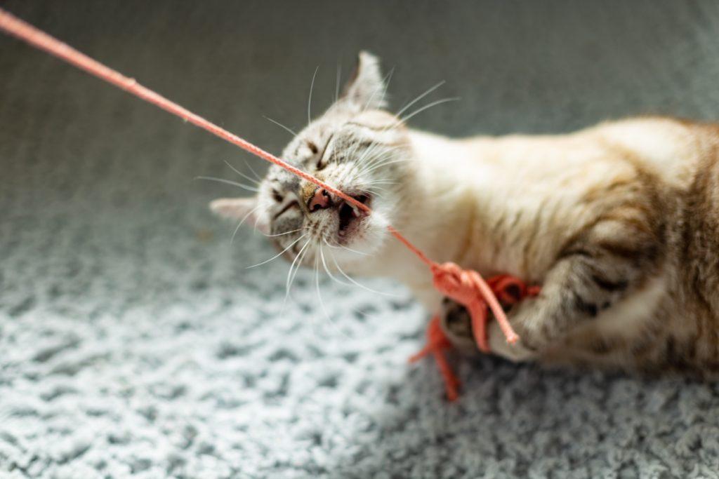 zabawy z kotem