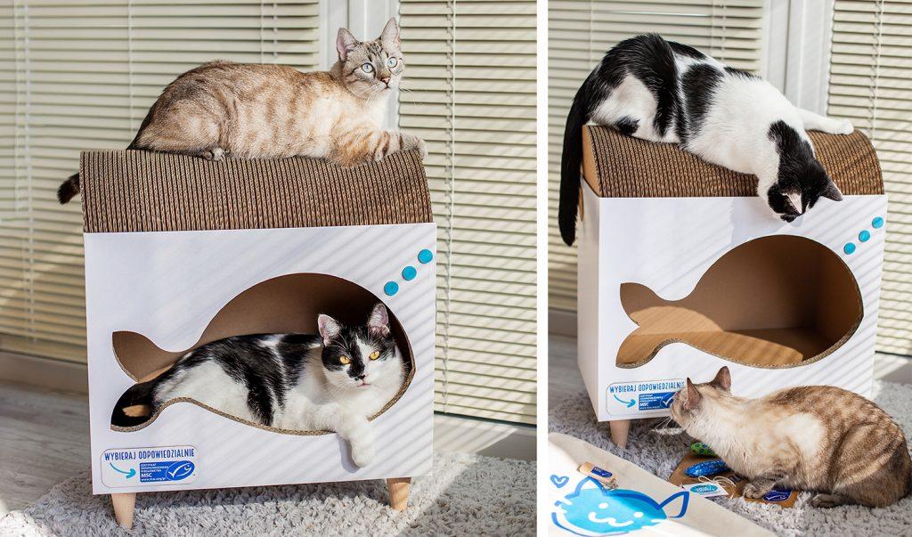 koty w drapaku Misspaper