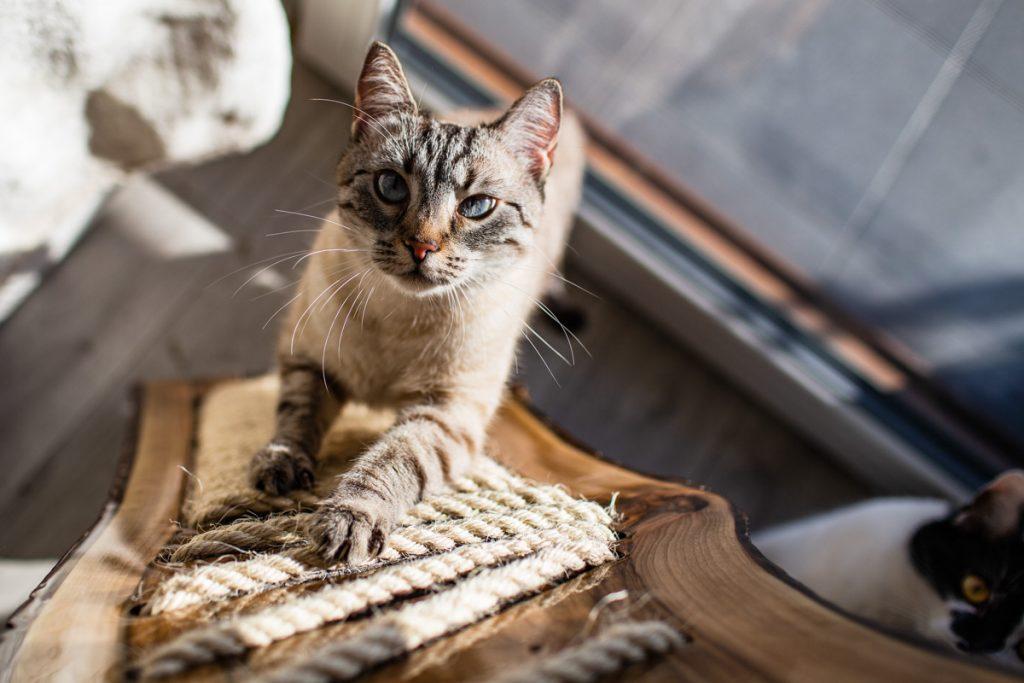 nowoczesny drapak dla kota