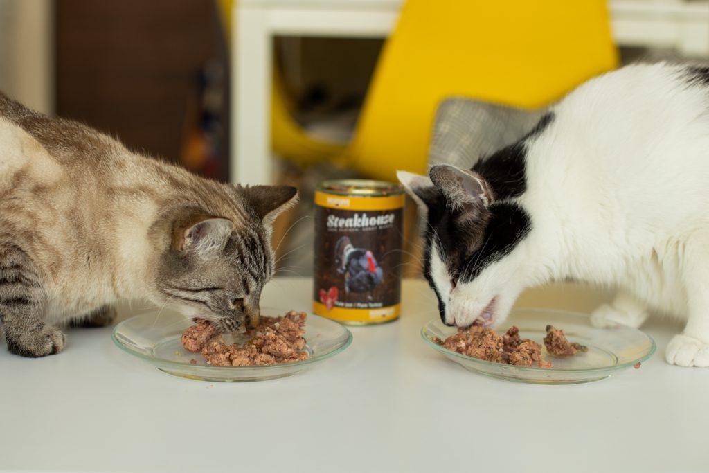 jedzenie dla kota
