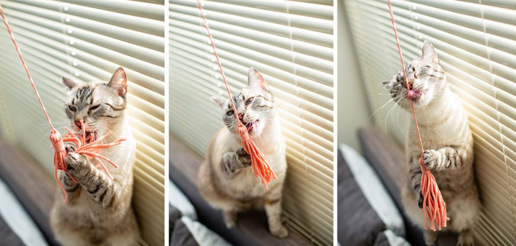wędka dla kota Meow Loops