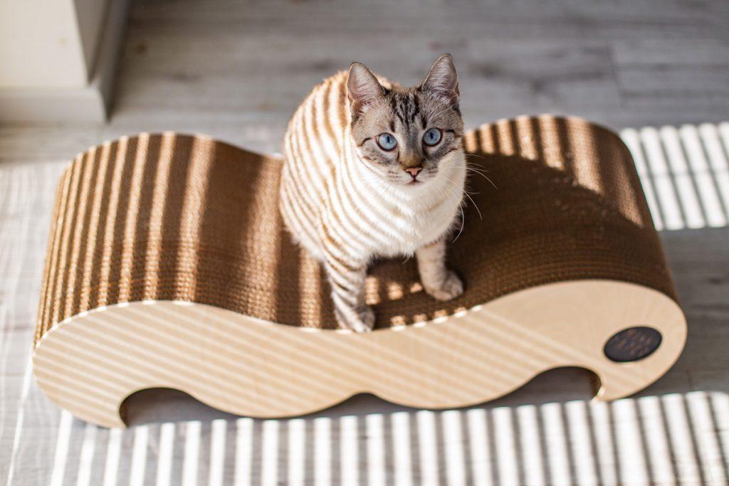 Drapak dla kota Misspaper