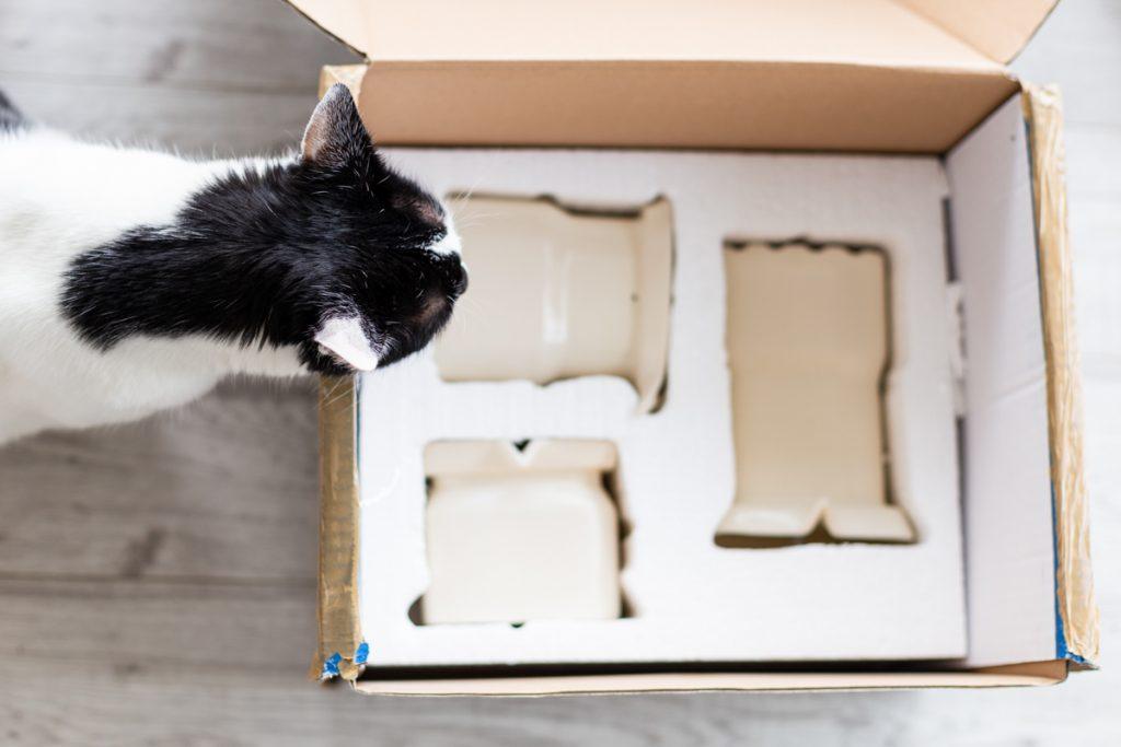 pudełko i kot