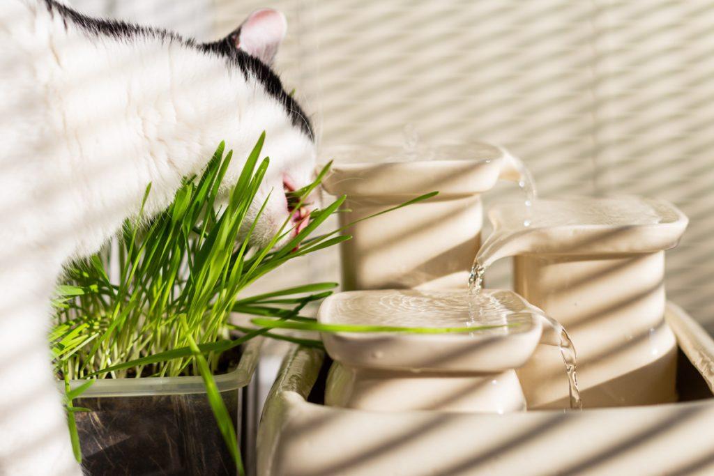 trawa i fontanna dla kota