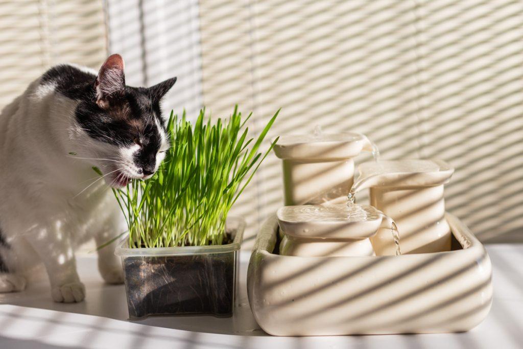 kot i trawa w doniczce