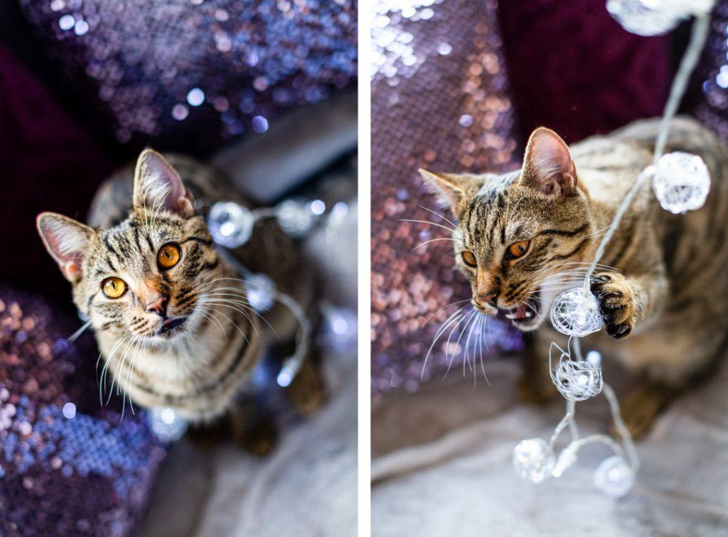 sesja zdjęciowa kota