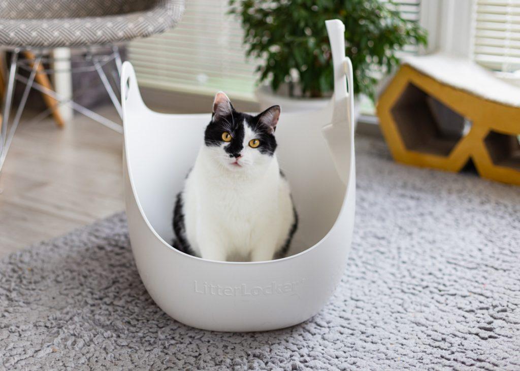 kuweta odkryta dla kota