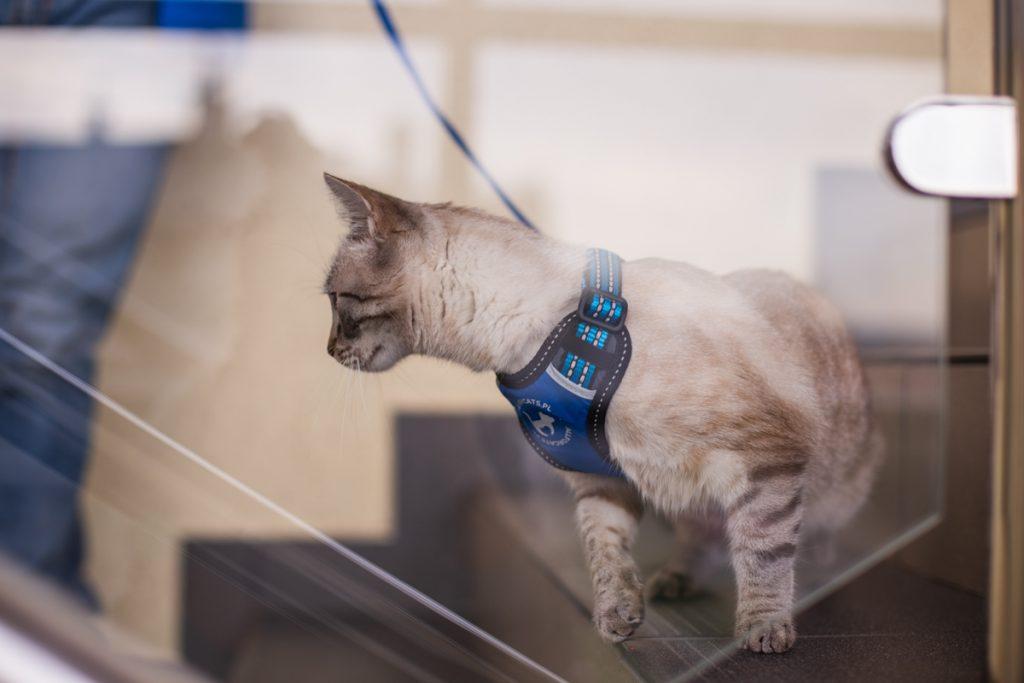Niebieskie szelki dla kota All for cats