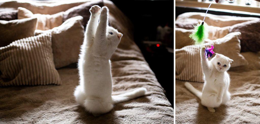 kot z wędką