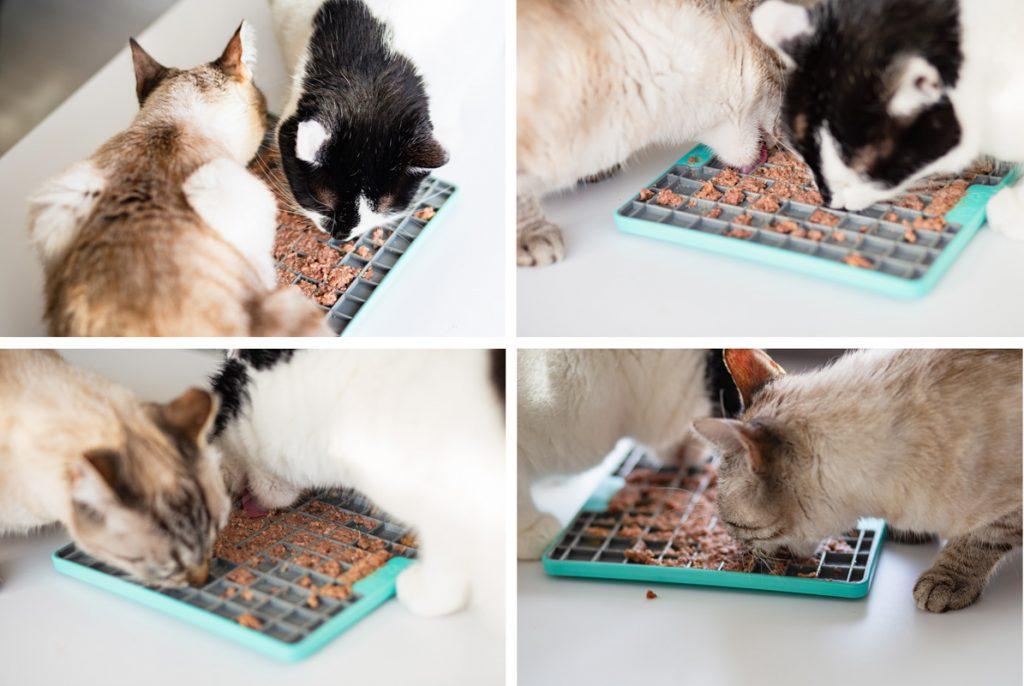 mata dla kota spowalniająca jedzenie