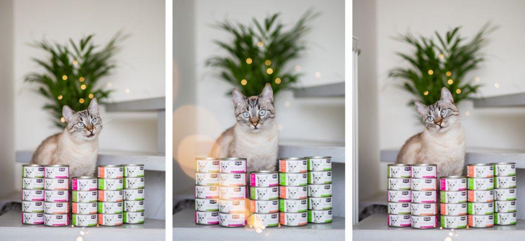 jak urozmaicić dietę kota?