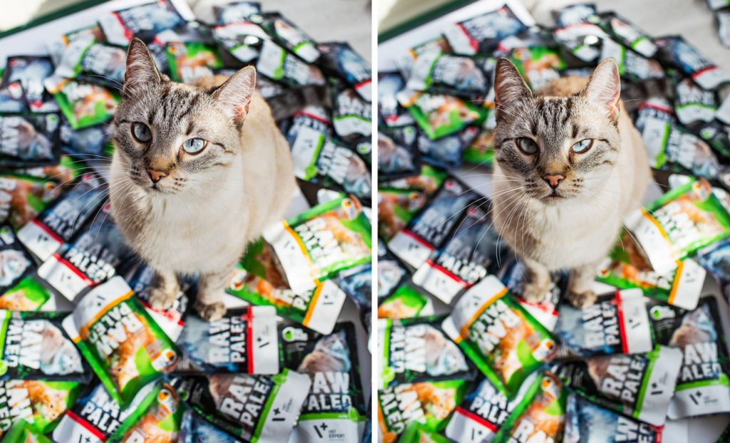 saszetki raw paleo dla kotów dorosłych