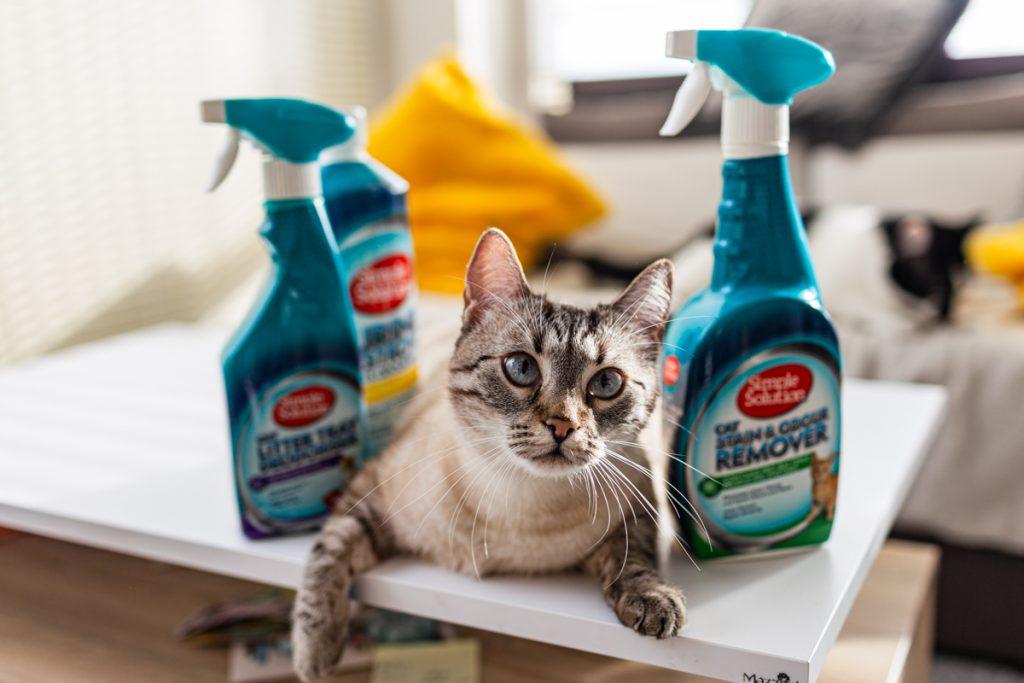 utrzymanie czystości przy kotach