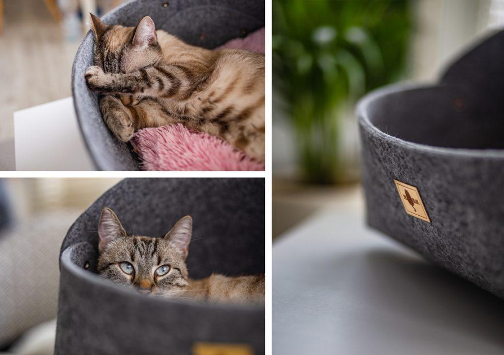 ekologiczne produkty dla kotów