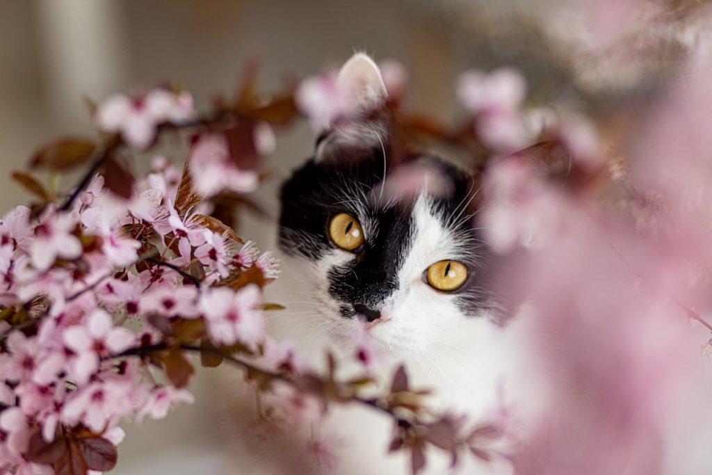 kwiaty i kot