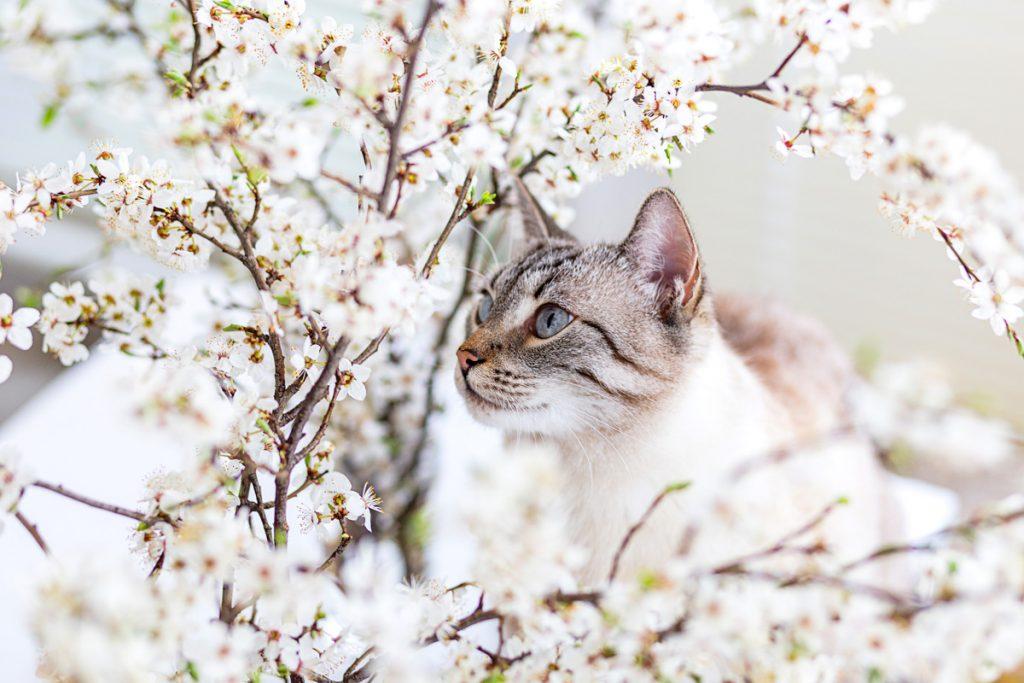 wiosna i kot