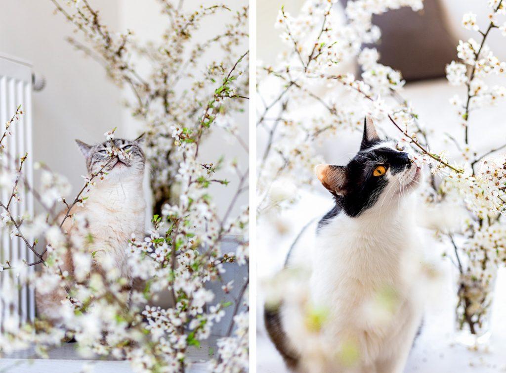 kocia sesja wiosną