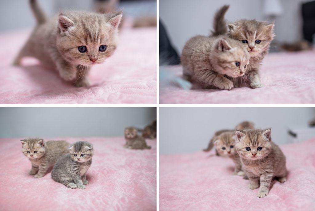 sesja zdjęciowa kotów