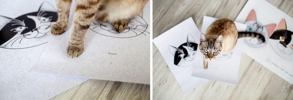 szkice z kotem