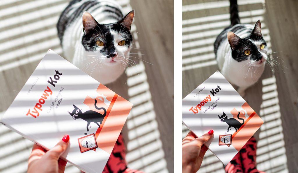 """książka """"Typowy kot"""""""