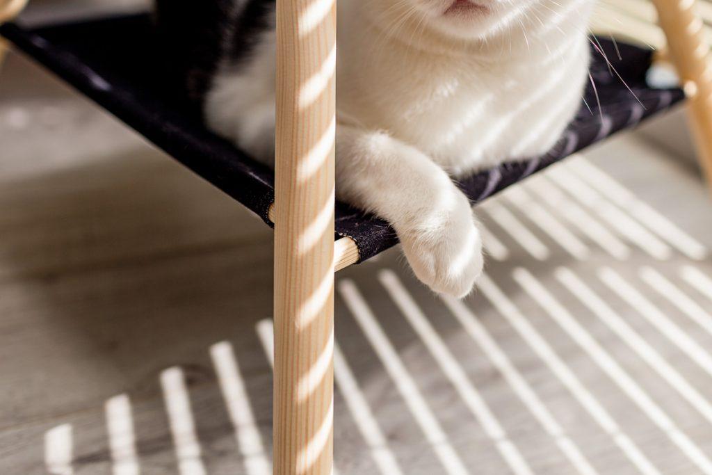 sesja produktowa koty