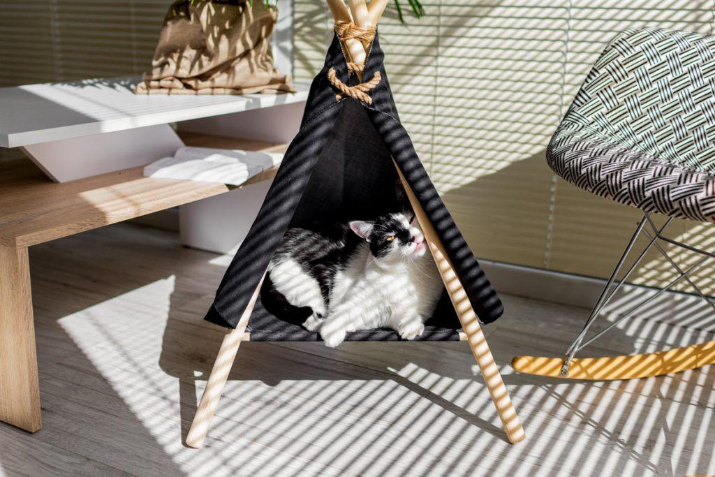 namiot dla kota