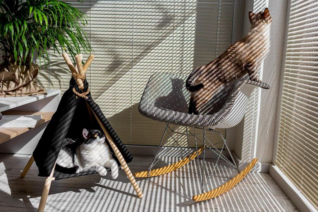 sesja z kotami