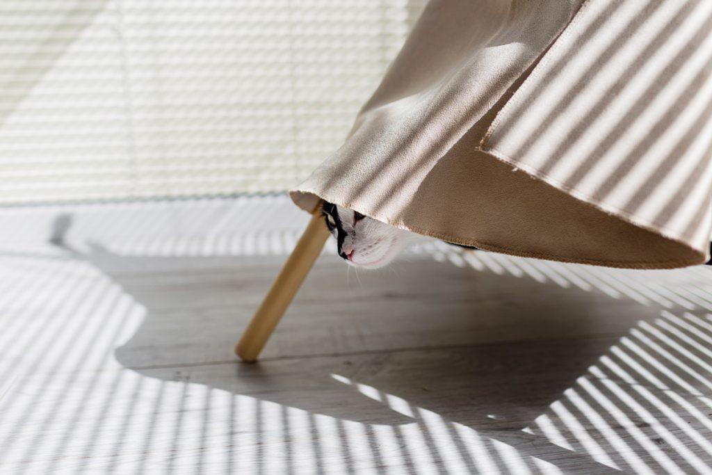 kot w tipi