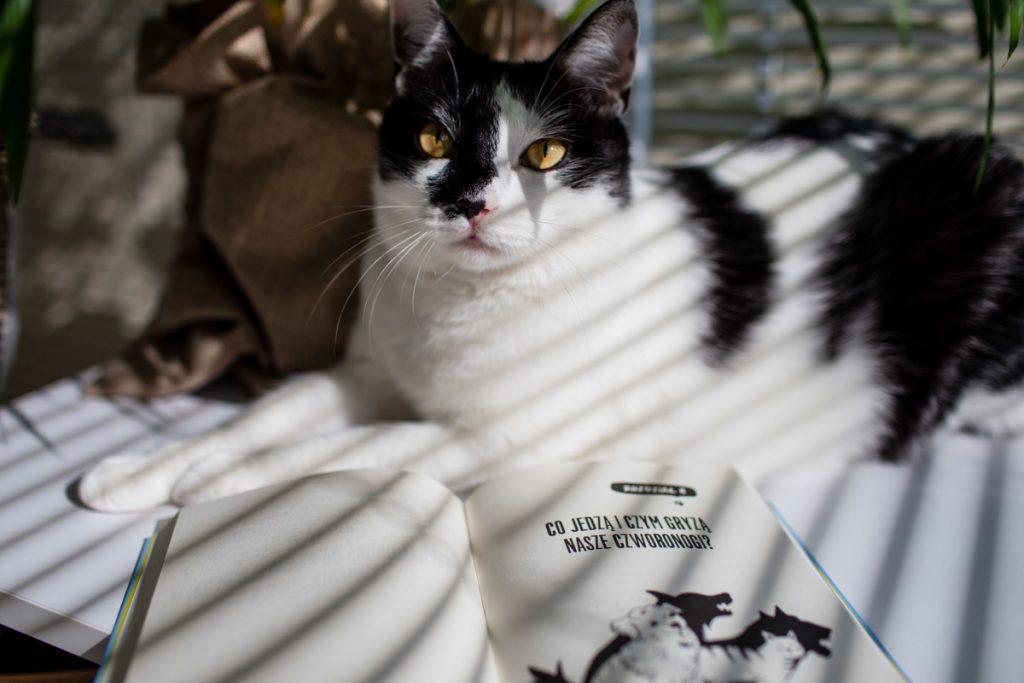 książka o żywieniu kotów