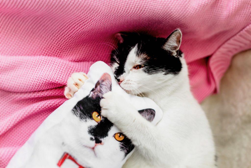 poduszka z podobizną kota