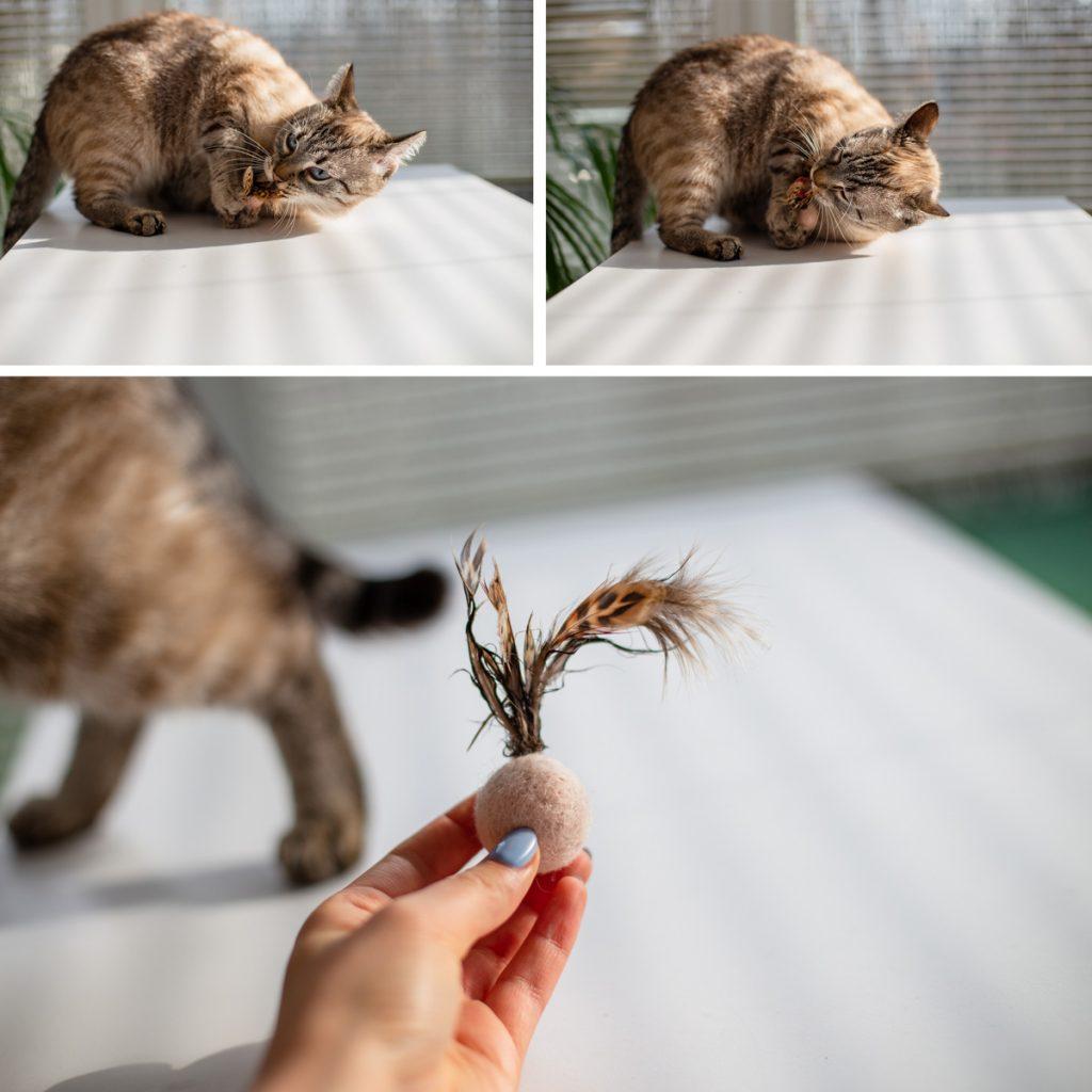 piłeczki dla kota